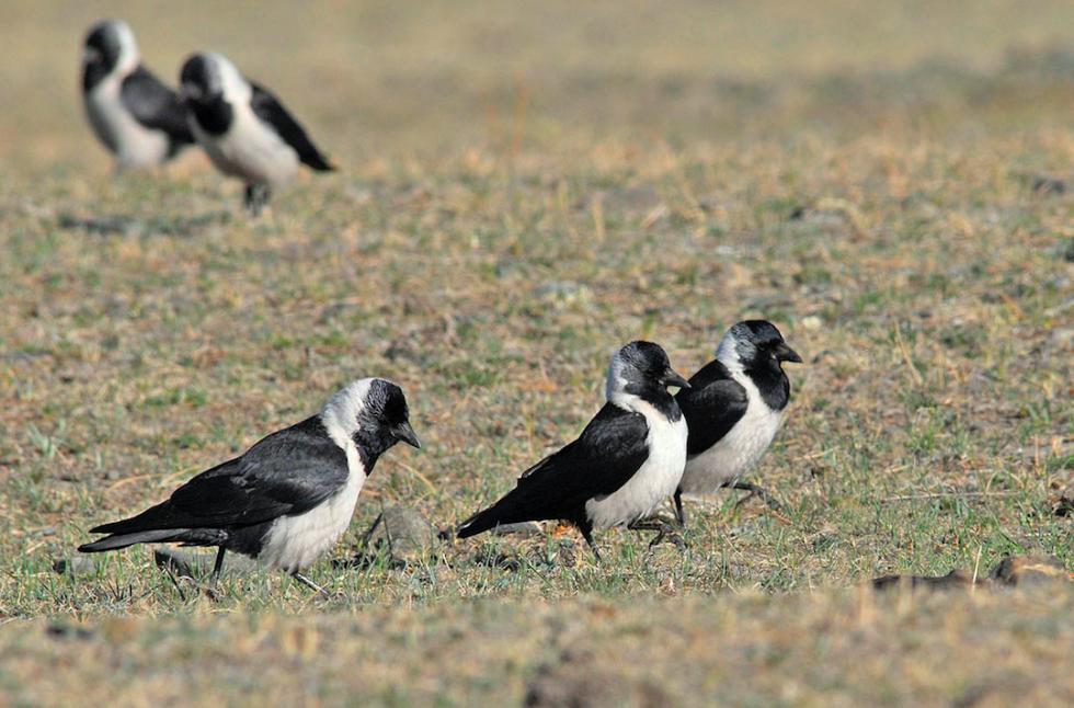 'Jalman Meadows', Mongolia