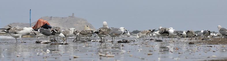 Al Batinah Coast, Oman