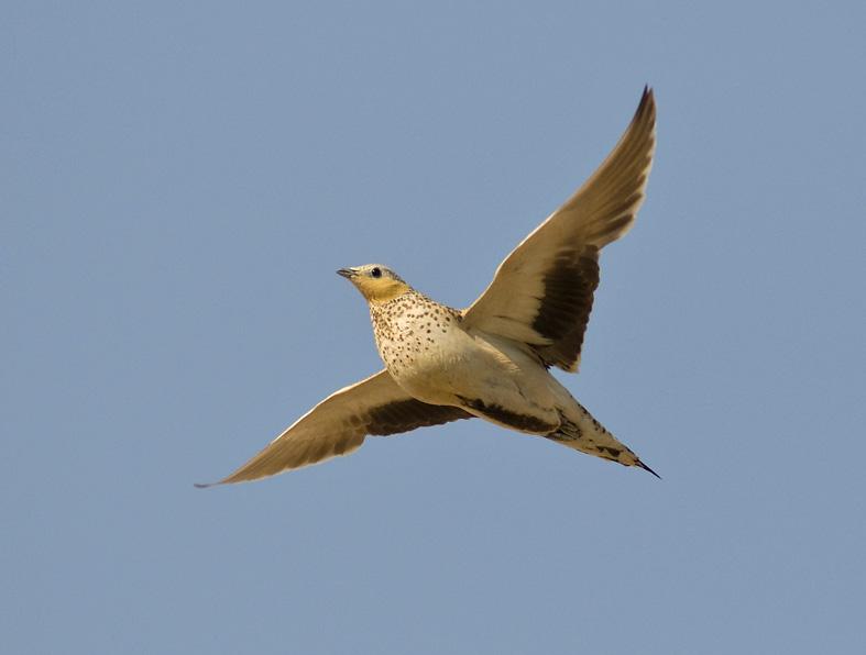 Muntasar Oasis, Oman