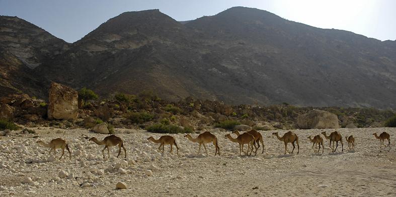Wadi Al Mughsayl, Oman